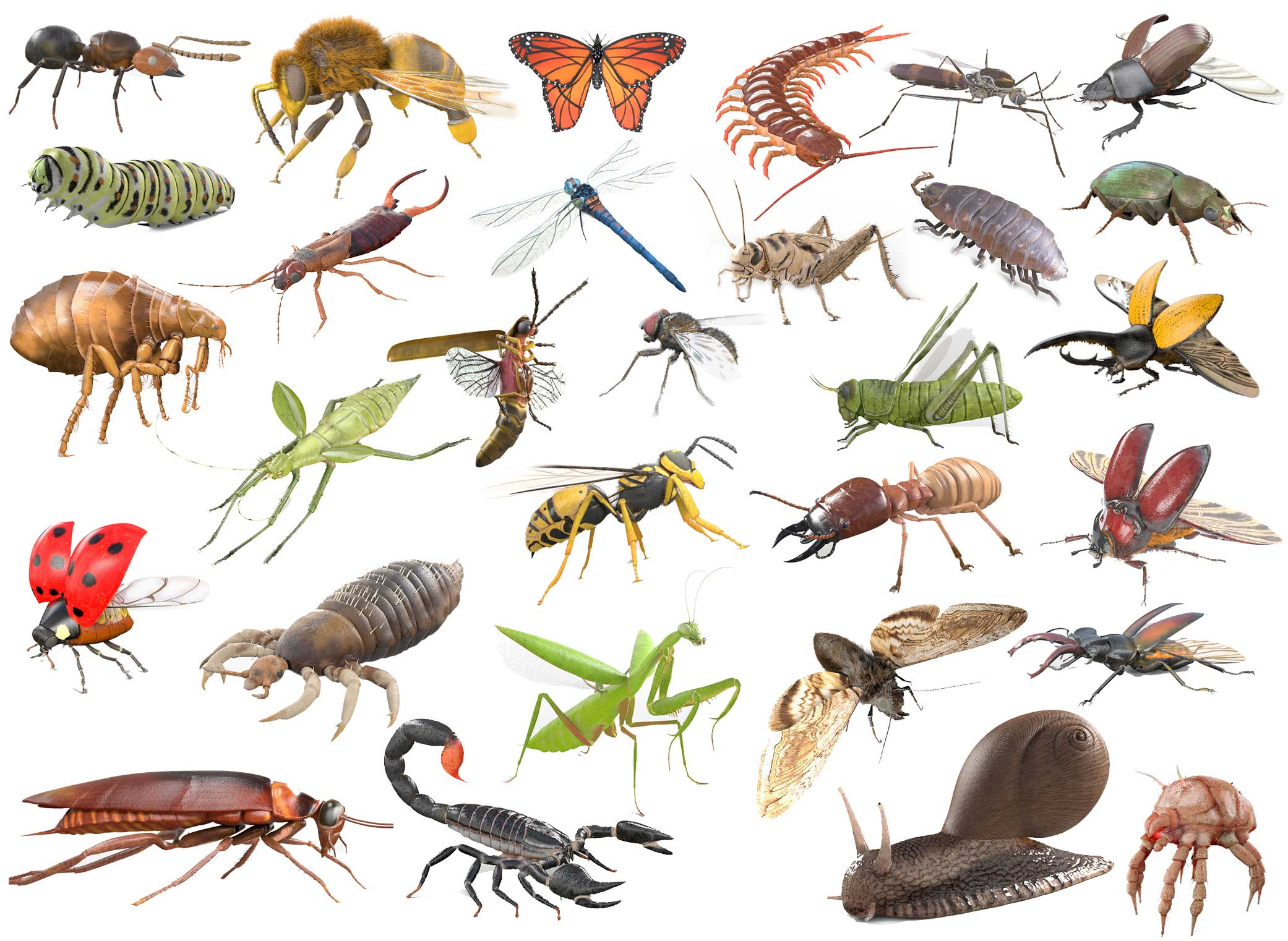 insect 3d models