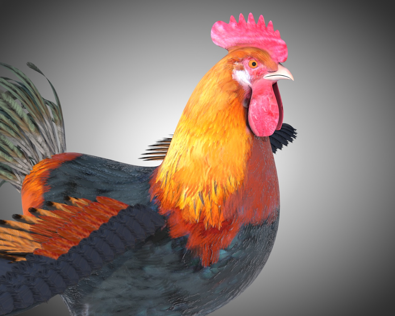 rooster cock